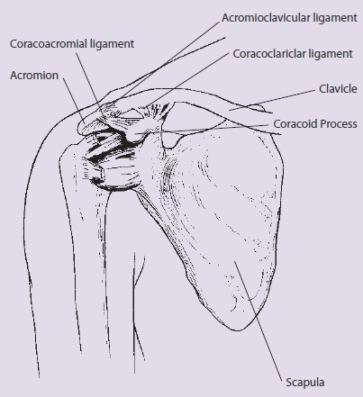 Acromioclavicular (AC) Joint Injury | Sports Medicine Australia